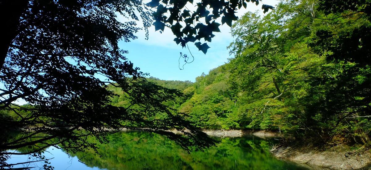 秋田県白神山地